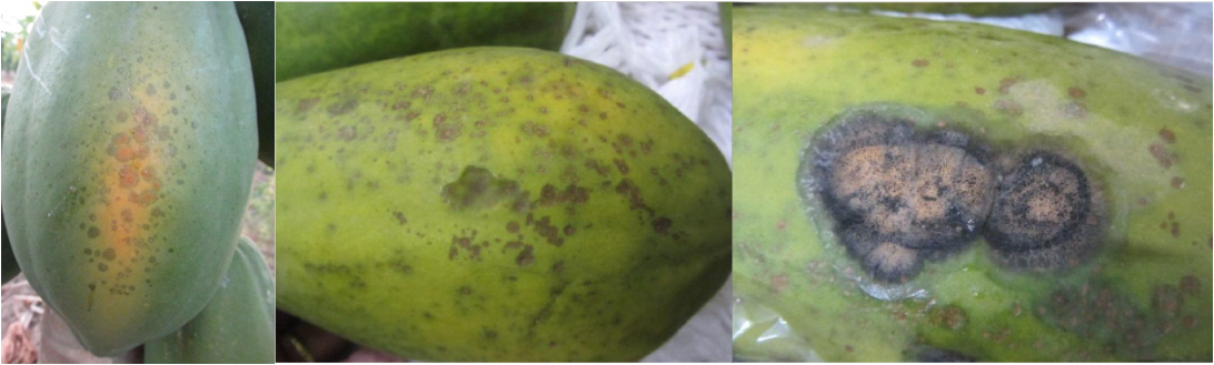 Si es posible cortar el hongo sobre la uña