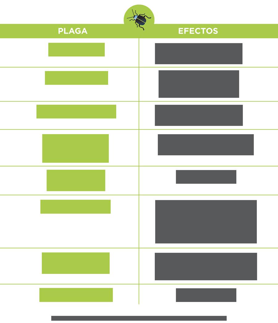 Impactos del cambio climático en la incidencia de plagas y ...