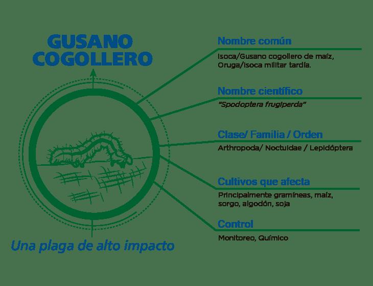 Gusano cogollero - CropLife Latin America
