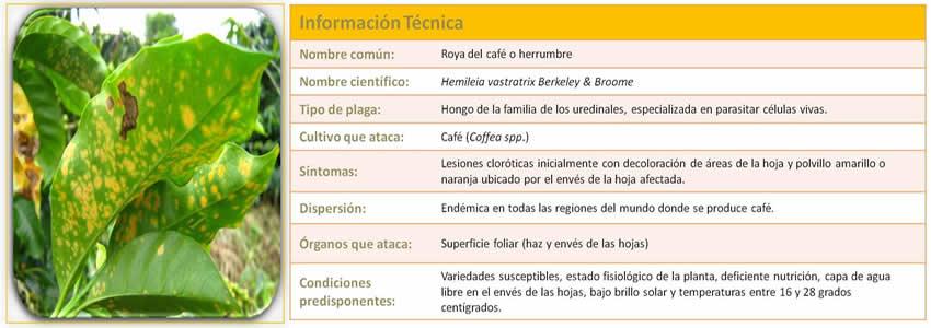 Informacion Técnica Roya del Café