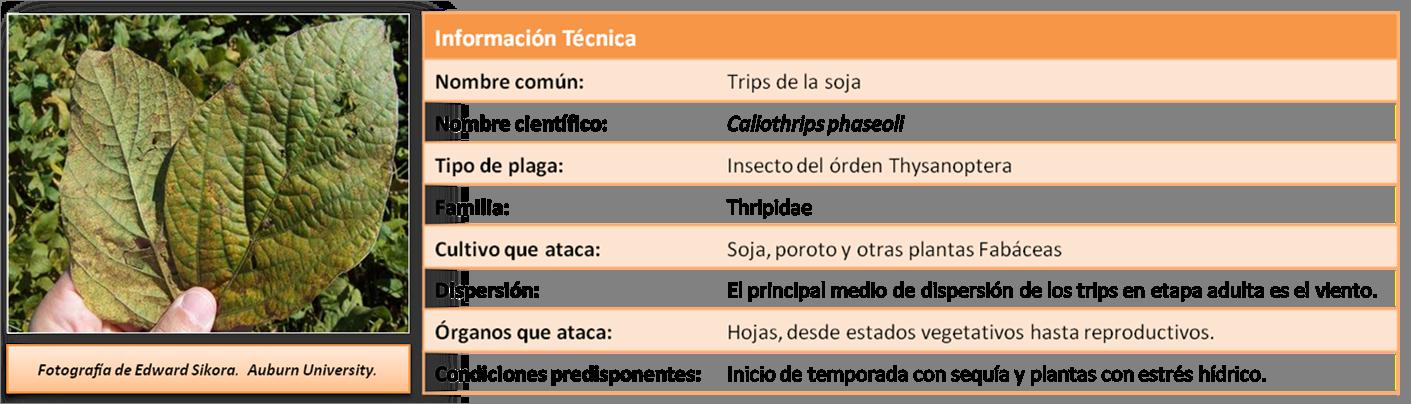Informacion Tecnica Trips en Soja
